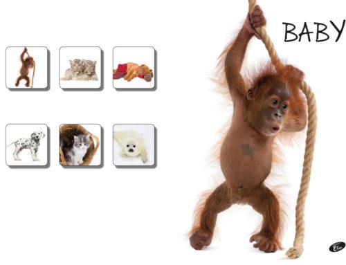 Baby – Monkey