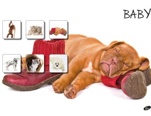 Baby – Dog
