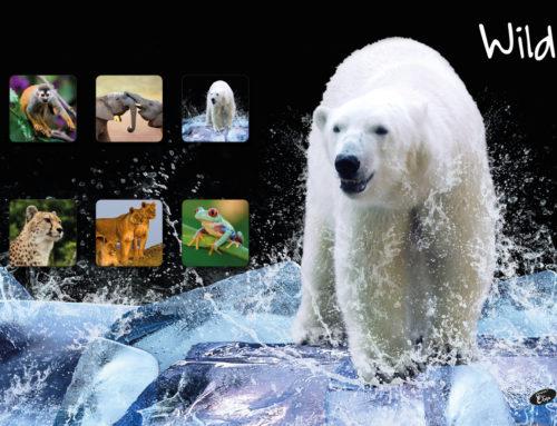 Wild – white Bear