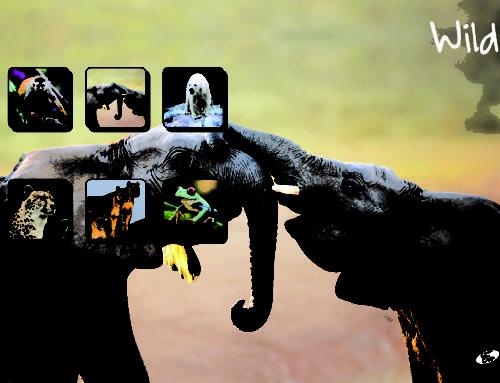 Wild – Elephant